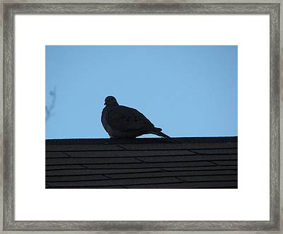 Relaxing On The Roof Framed Print by Rickey Rivers Jr