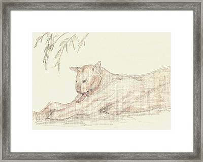 Relaxing Panther Framed Print by Rosalie Scanlon