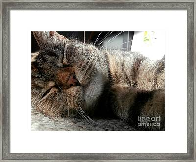 Relaxing Framed Print by Steven Valkenberg