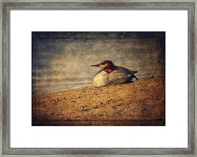 Relaxing Under The Sun  Framed Print by Maria Angelica Maira