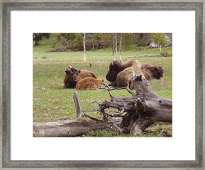 Relaxing Framed Print by Yvette Pichette