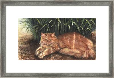 Relief From The Heat Framed Print by Terri  Meyer