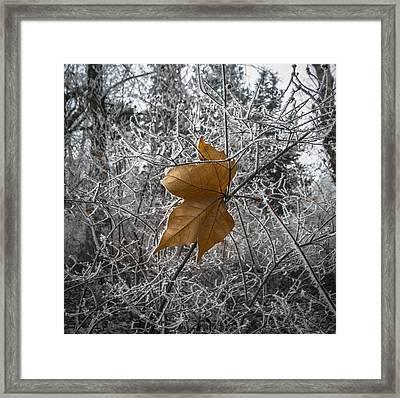 Remained Framed Print by Akos Kozari