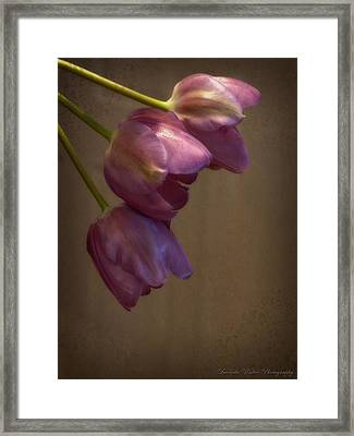 Framed Print featuring the photograph Remaining Glory by Lucinda Walter