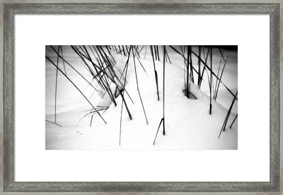 Framed Print featuring the photograph Remains Of Summer by Michael Dohnalek