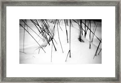 Remains Of Summer Framed Print