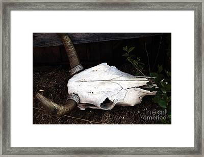 Remains Of The Day Framed Print by John Rizzuto