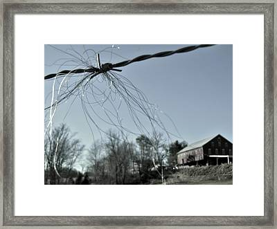 Remains Of The Mane Framed Print by Sharon Costa