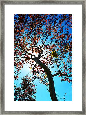 Framed Print featuring the photograph Remains Of The Summer by Richard Stephen