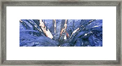 Remains Of Vegetation From A Fire Framed Print