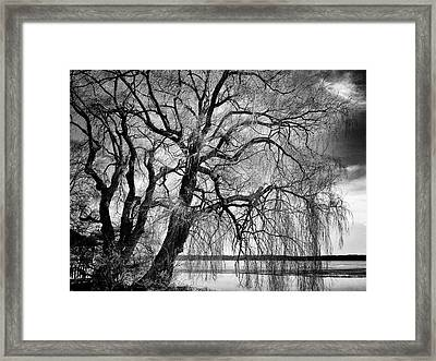 Remains Of Winter Framed Print