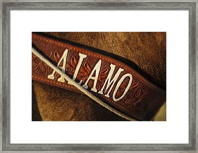 Remember The Alamo Framed Print by Amber Kresge