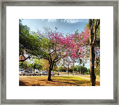 Remember This Place Framed Print by Beto Machado