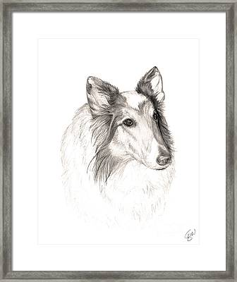 Remembering Maggie - A Tribute To A Collie Framed Print by Stacey May