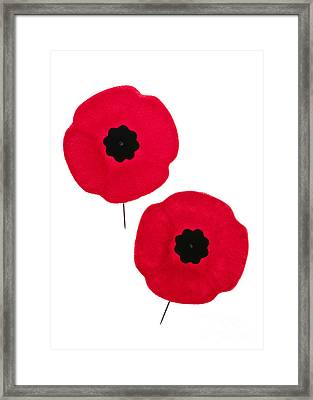 Remembrance Day Poppies Framed Print