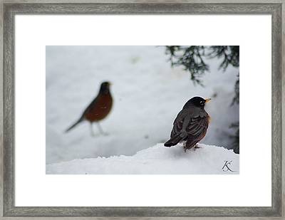 Reminiscing Robin Framed Print