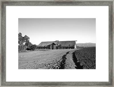 Remnants Of The Grapes Of Wrath Framed Print
