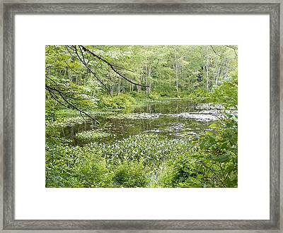 Remote Framed Print by James McAdams