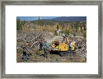 Removing Dead Trees Framed Print