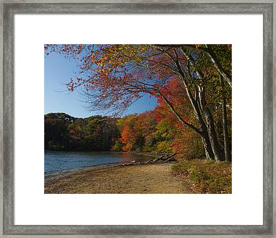 Framed Print featuring the photograph Renewal Five by Jose Oquendo