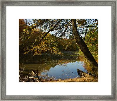 Framed Print featuring the photograph Renewal Four by Jose Oquendo