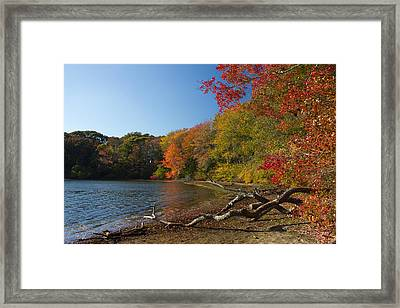Framed Print featuring the photograph Renewal One by Jose Oquendo