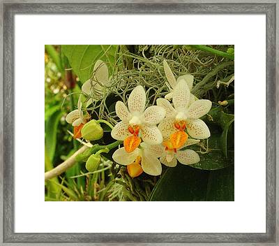 Renewal Framed Print by Rodney Lee Williams