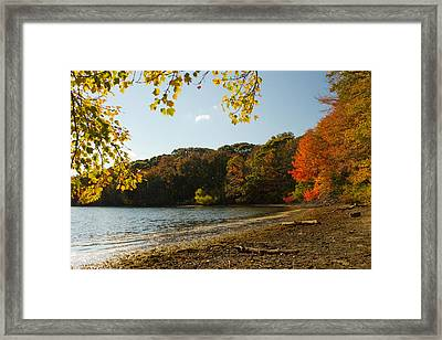 Framed Print featuring the photograph Renewal Three by Jose Oquendo