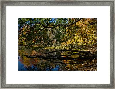 Renewal Two Framed Print