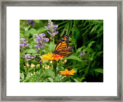 Renewed Framed Print by Rodney Lee Williams