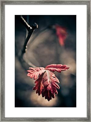 Renewing The Spirit Framed Print