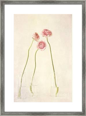 Renoncules Framed Print