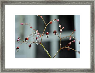 Repeated Reflections Framed Print by Kelly Nowak
