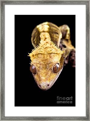Reptile Close Up On Black Framed Print