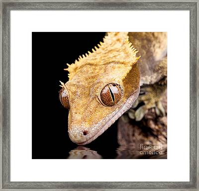 Reptile Near Water Close Up Framed Print