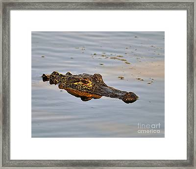 Reptile Reflection Framed Print