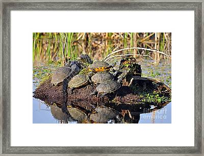 Reptile Refuge Framed Print by Al Powell Photography USA
