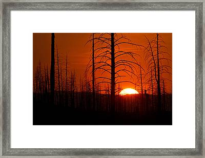Requiem For A Forest Framed Print by Jim Garrison