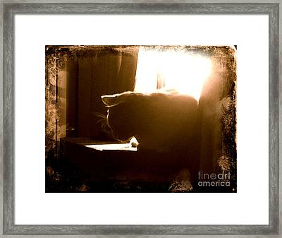 Rescue Cat Framed Print