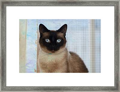 Rescue Me 2 Framed Print