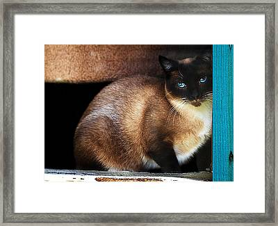 Rescue Me Framed Print by Camille Lopez