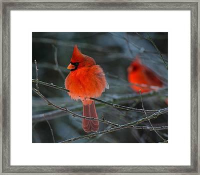 Resident Reds Framed Print