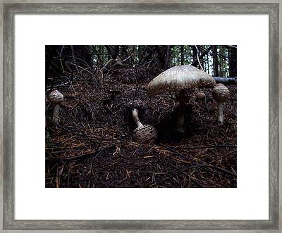 Residents Framed Print