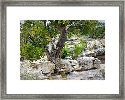 Resilient Tree Framed Print by Carol Groenen