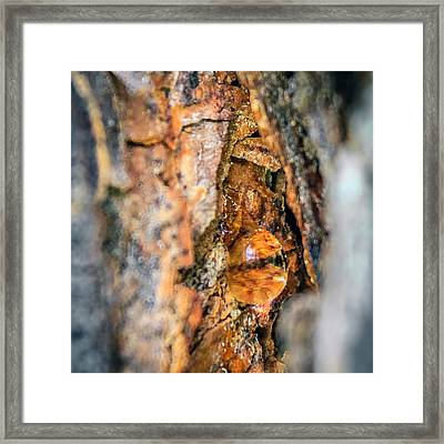 Resin Abstract Framed Print by Rob Sellers