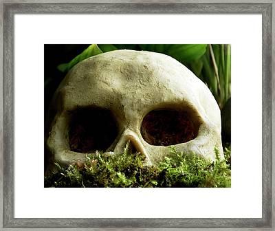 Resin Primate Skull Framed Print by Ian Gowland
