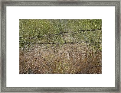 Resonate Framed Print by Viktor Savchenko