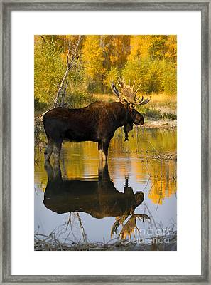 Respite  Framed Print by Aaron Whittemore
