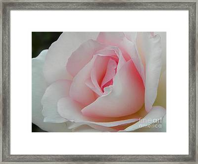 Framed Print featuring the photograph Resplendent by Deb Halloran