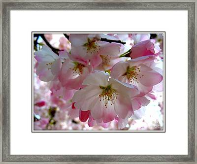 Resplendent Framed Print by Patti Whitten
